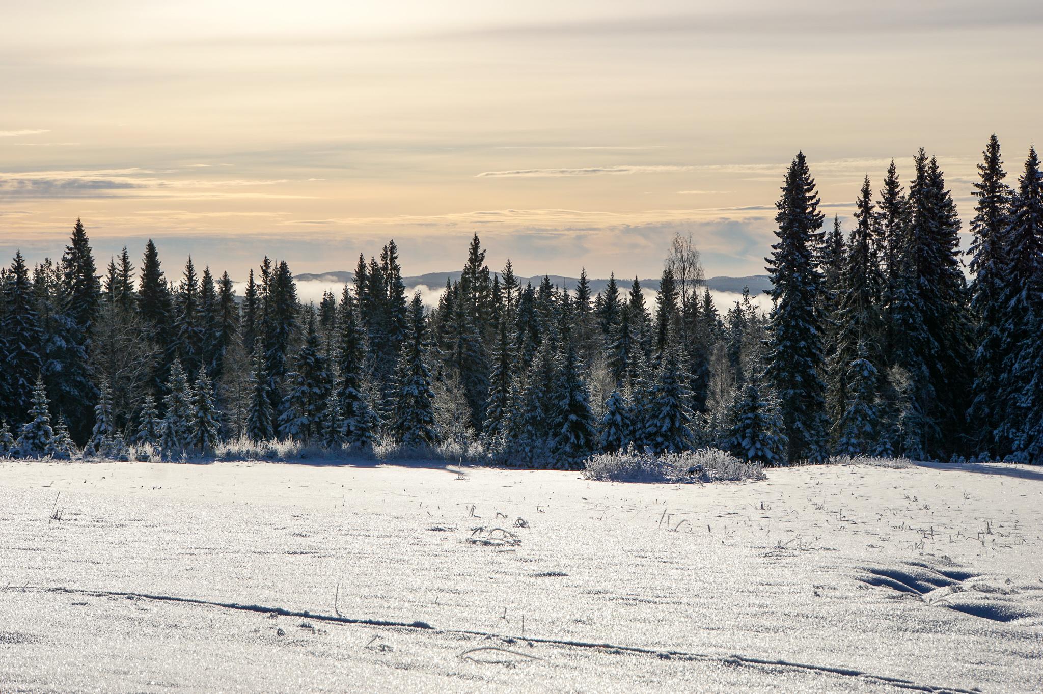 En tur till Västerbotten